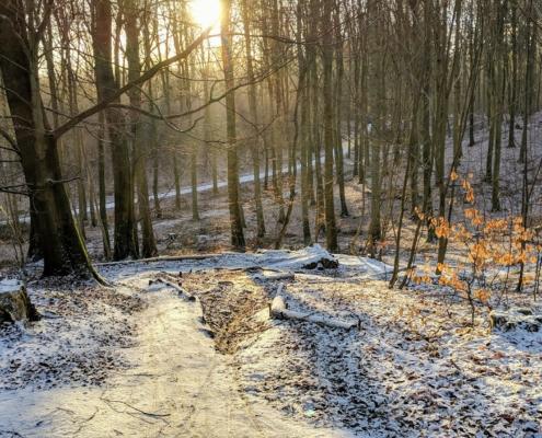 Snedækket skov. Foto: Aarhus Kommune